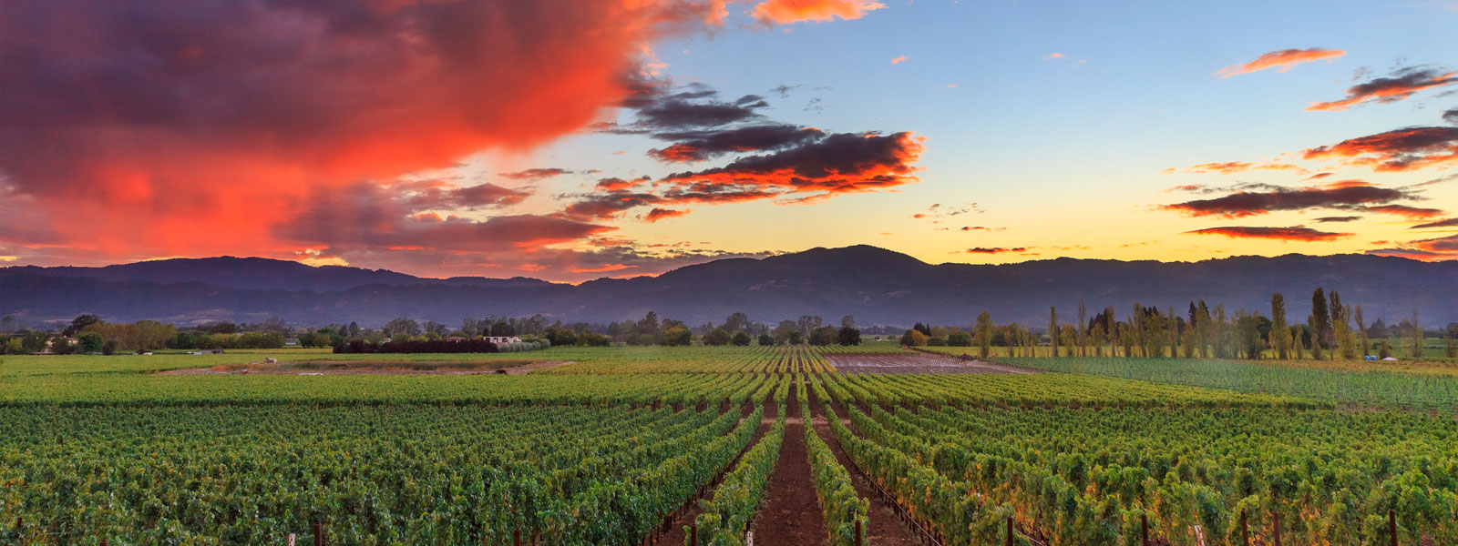 Ladera Vineyards Silverado Trail Sunset